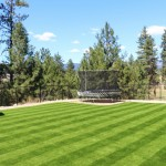 synthetic turf backyard