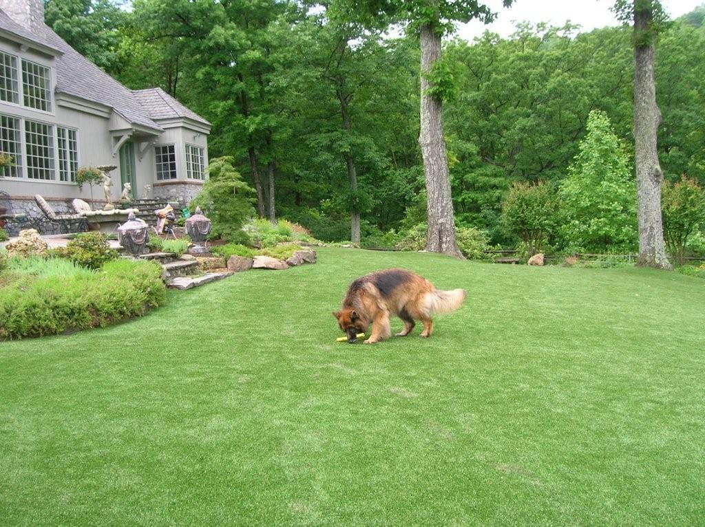 Artificial Grass & Turf | Synthetic Turf International | Pet Turf