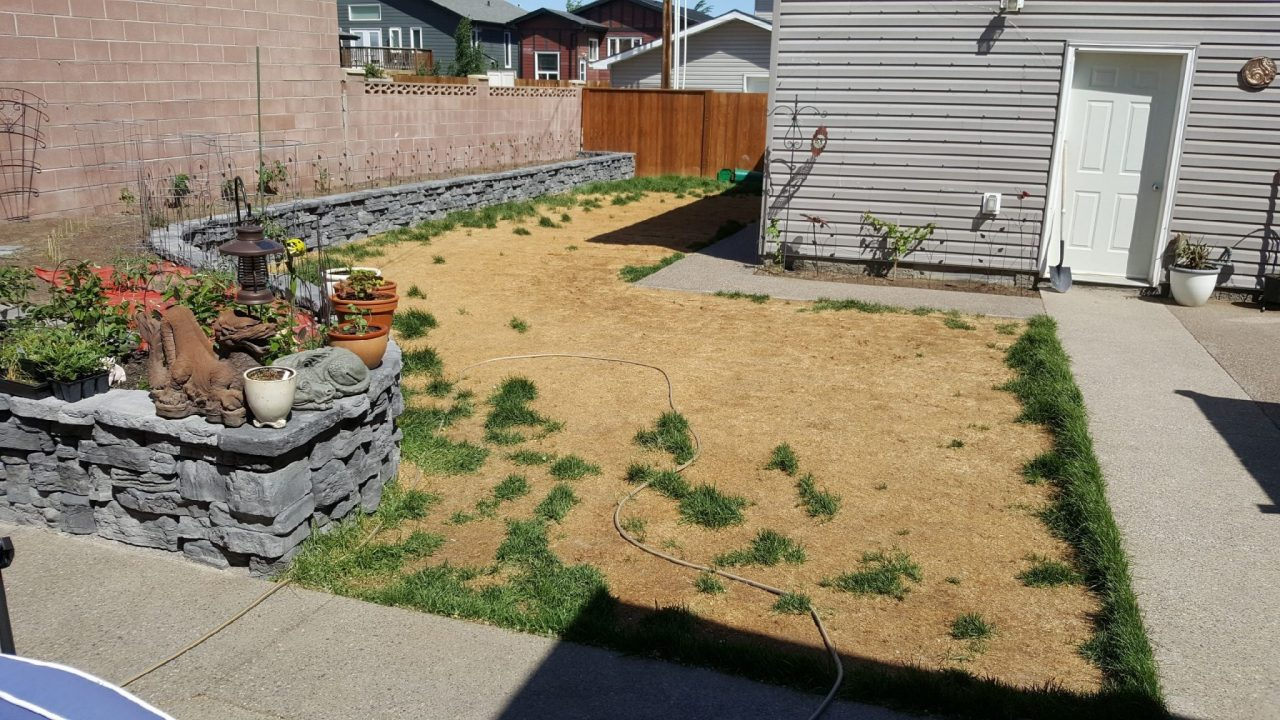synthetic turf install before