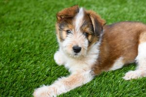 Benefits of Fake Grass for Pets
