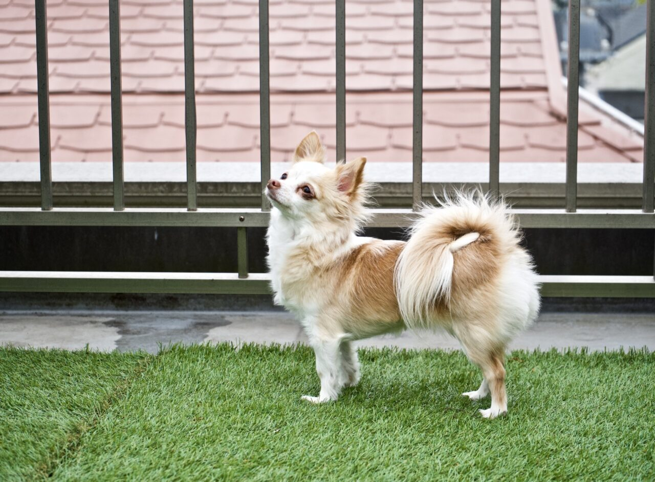Read more on How to Care for Artificial Grass When You Have a Dog