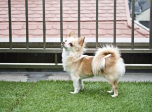 How to Care for Artificial Grass When You Have a Dog